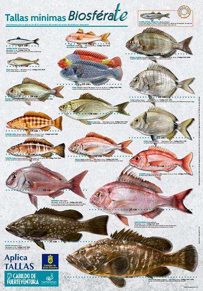 poster_tallas_minimas_peces