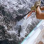 Pesca de altura: Gran Tarajal, Puerto del Rosario y El Castillo